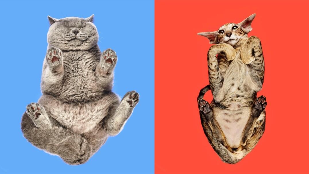 Jak wyglądają koty... od spodu? Zaspokajamy waszą ciekawość