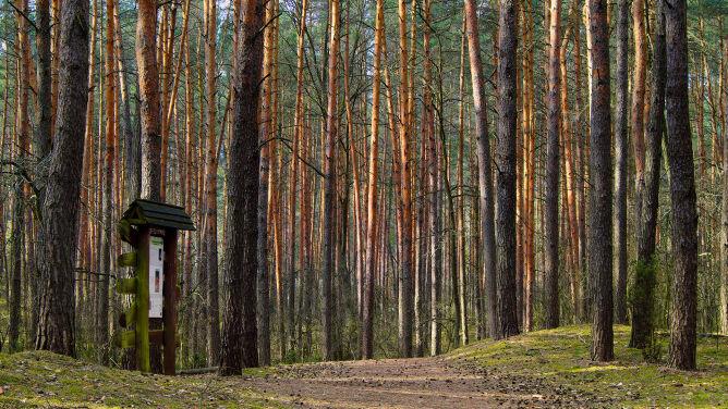 Parki narodowe w Polsce. <br />Sprawdź, które są już otwarte